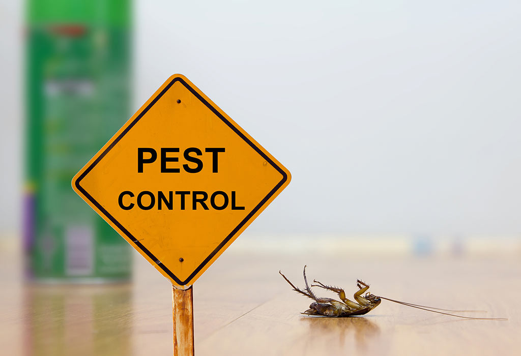 Are you looking for a low budget pest control service in Trivandrum?