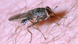 Pest Control Trivandrum | Termite Control Trivandrum | Post Construction Termite Treatment | Pest Control Kerala | Pest Control & Cleaning Services