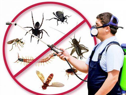 100% safest pest control service provider in Trivandrum