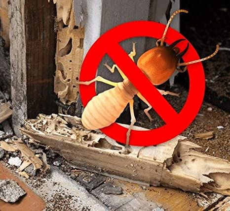 Effective Termite Control services at low cost