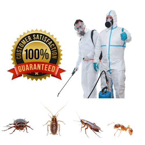 Safety pest control services in Triavndrum