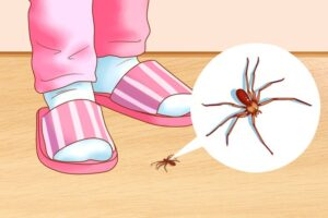 Tips to remove pests from Home