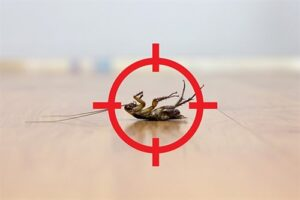 Permanent pest killing service agency in Trivandrum