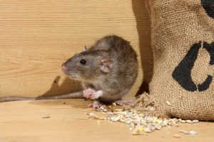 Cleaning and Pest Control agency in Trivandrum