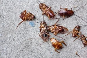 5 Tips To Keep Cockroaches Out of Your Apartment