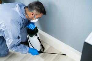 Things you Must Consider Before Hiring The Best Pest Control Agency